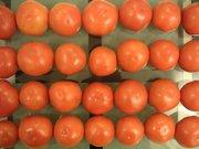 tomato28.jpg